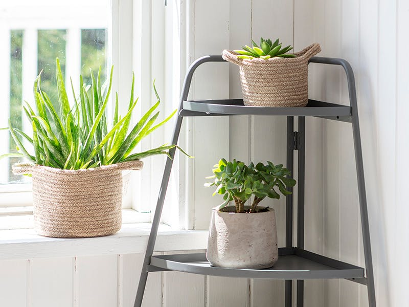 Corner Plant stand with fresh green plants of multiple sizes in different textured pots