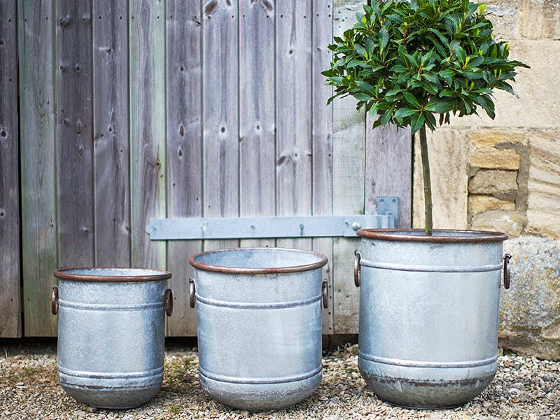 3 sizes of Malmesbury Planters with tree in the largest, set against a distressed-wood gate