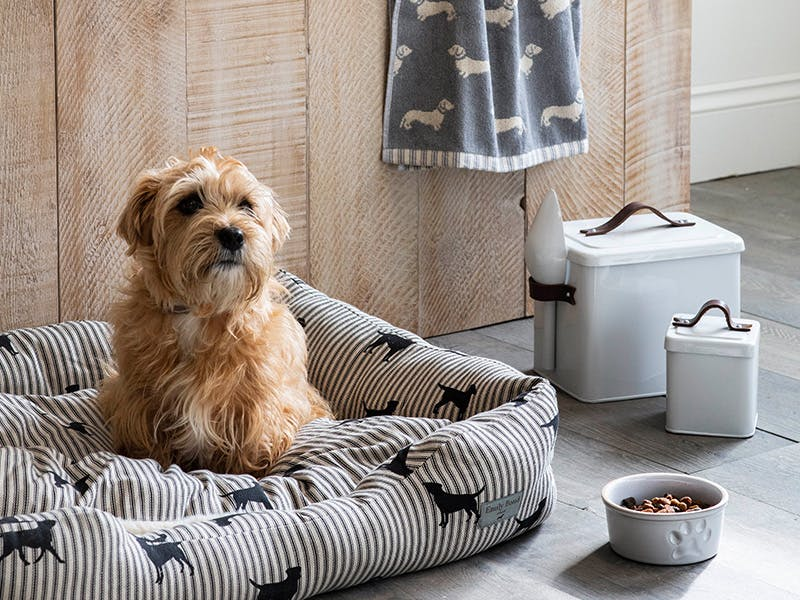 Prize bundle with dachshund towel, dog bed, pet food bin, treat tin and pet bowl