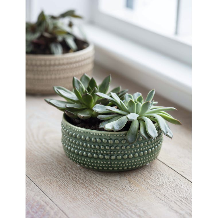 Garden Trading Casello Bowl, Medium in Foliage Green - Ceramic