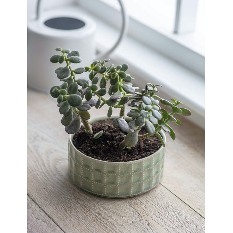 Garden Trading Sorrento Bowl in Sage - Ceramic