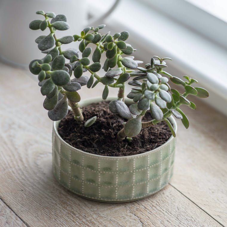 Ceramic Sorrento Bowl in Green | Garden Trading