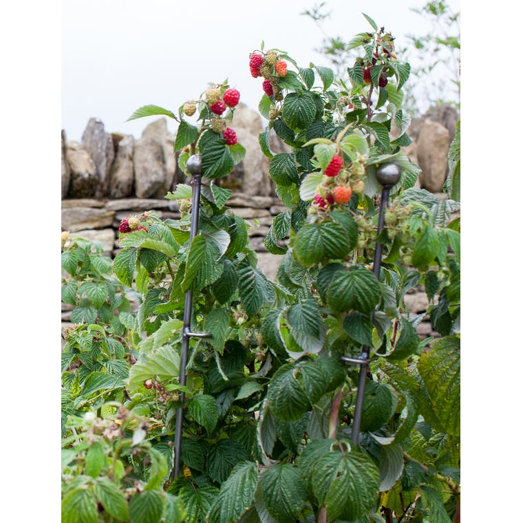 Raw Metal Set of 3 Barrington Raspberry Stakes | Garden Trading