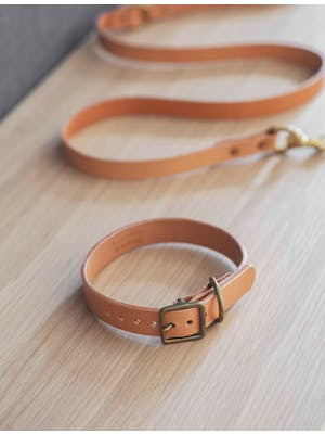 Leafield Dog Collar