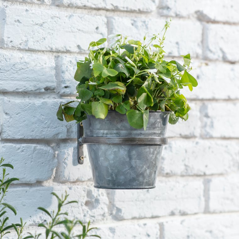 Single Winson Wall Pot and Holder in Silver or Black | Garden Trading