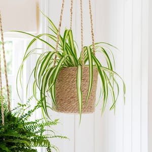 Woven Hanging Plant Pot