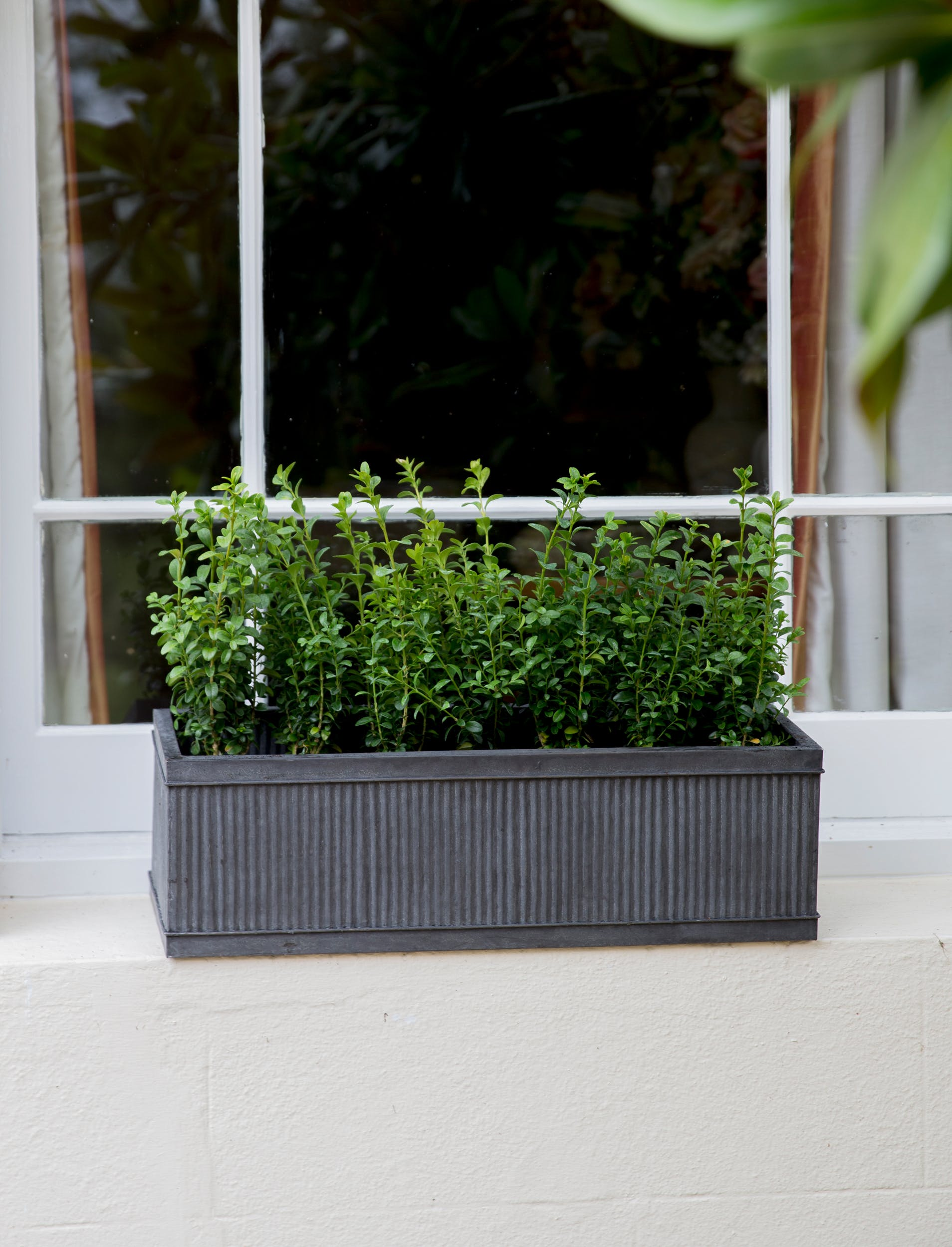 Steel Vence Window Box in Small or Large  | Garden Trading