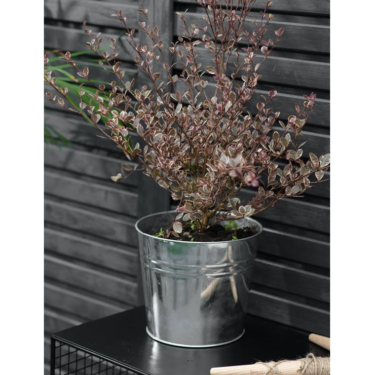 Large Winson Plant Pot in Silver by Garden Trading