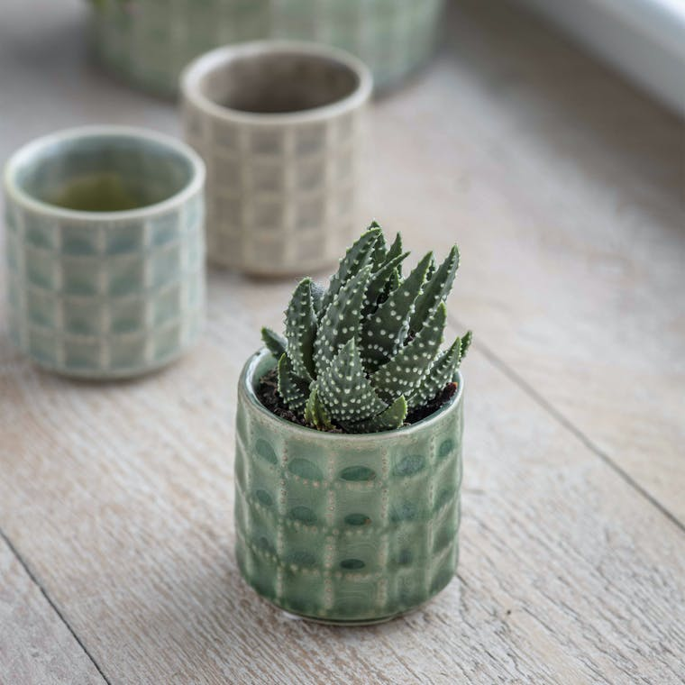 Ceramic Sorrento Pot, Small in Green or Natural | Garden Trading