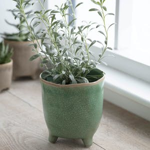 Foliage Green Positano Pot