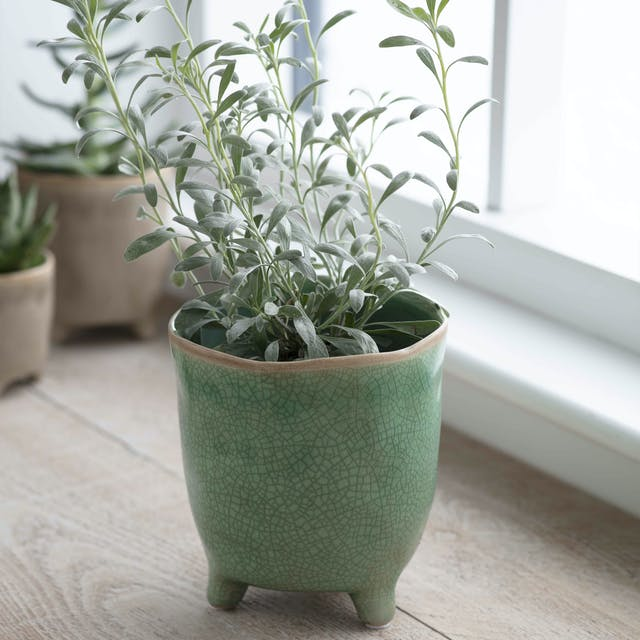 Positano Pot in Foliage Green