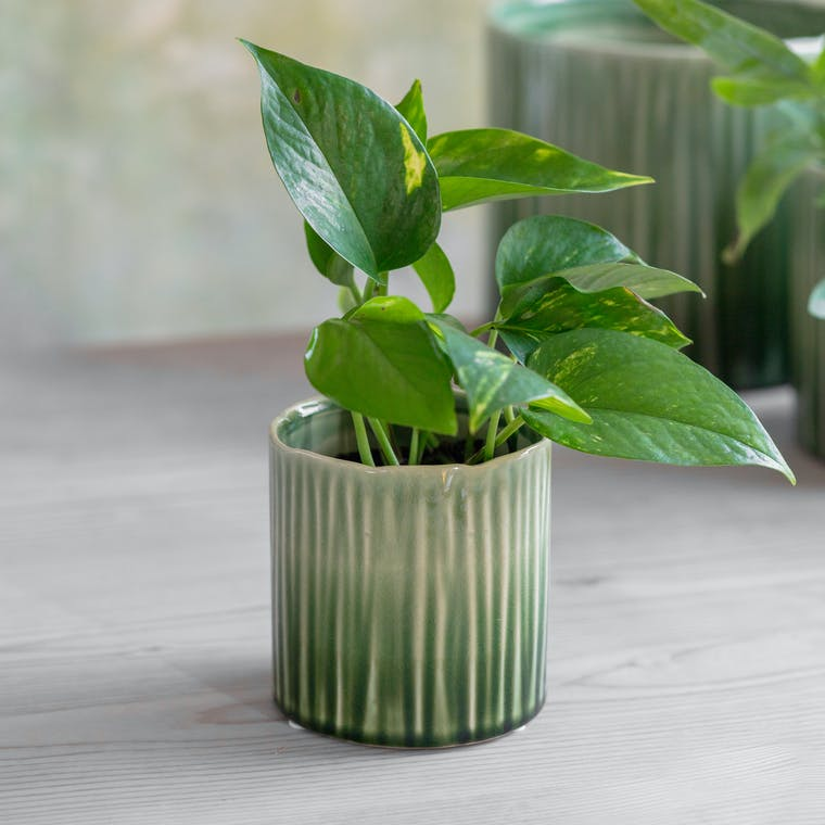 Ceramic Nettleton Pot in Small, Medium or Large | Garden Trading