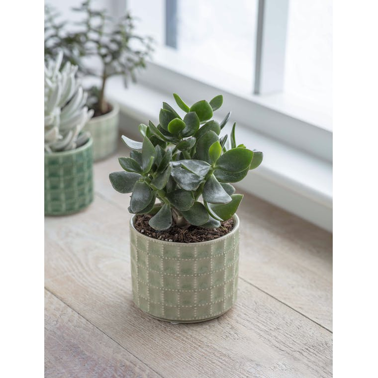 Garden Trading Sorrento Pot, Large in Sage - Ceramic