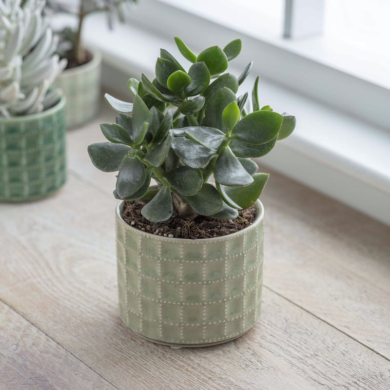 Ceramic Sorrento Pot in Medium or Large | Garden Trading