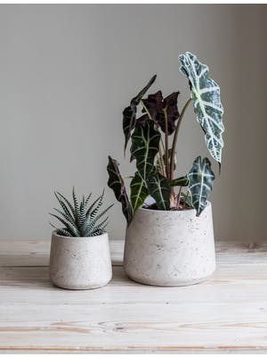 Set of 2 Stratton Tapered Plant Pots