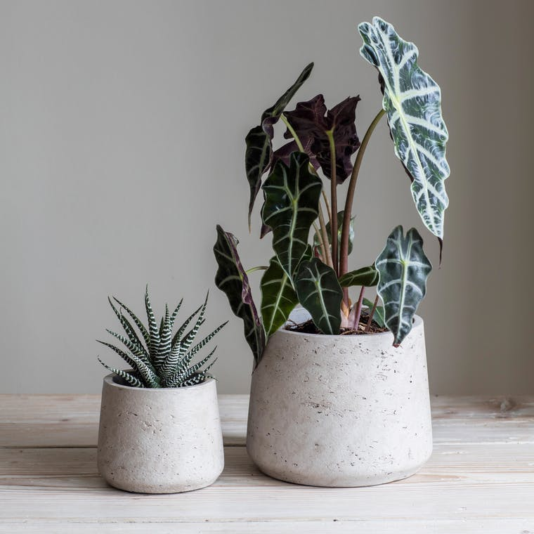 Concrete Set of Tapered Plant Pots in Cream or Black | Garden Trading