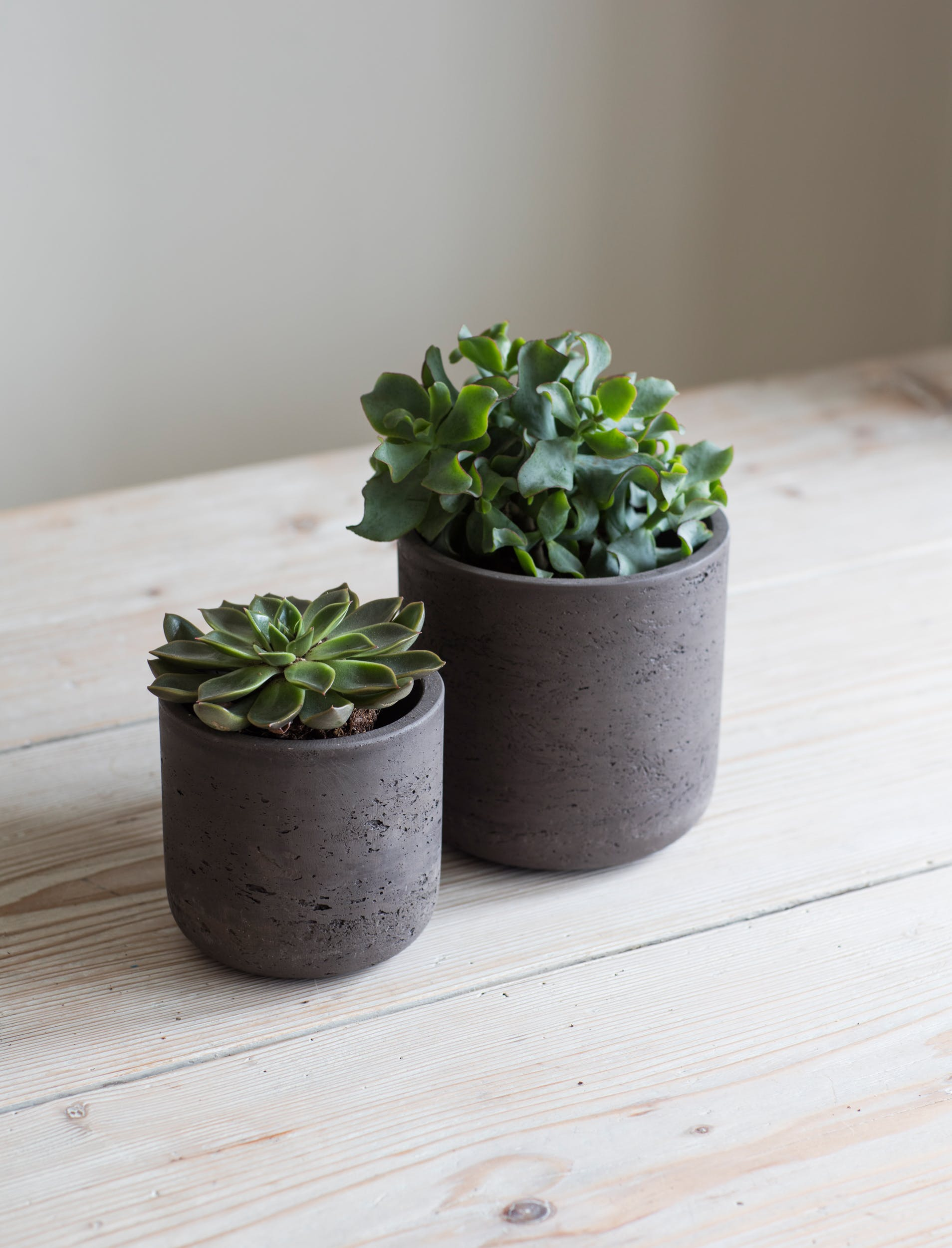 Cement Set of 2 Stratton Plant Pots in Cream or Brown   Garden Trading