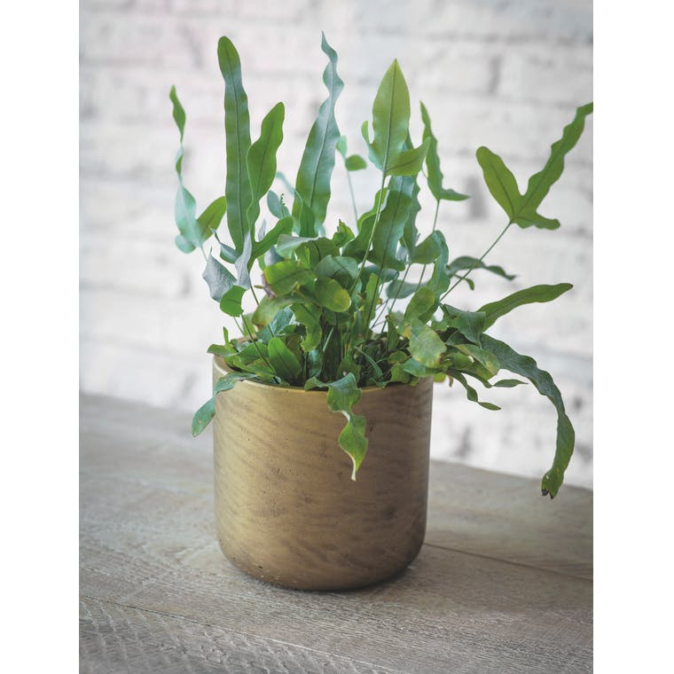 Garden Trading Gold Stratton Plant Pot