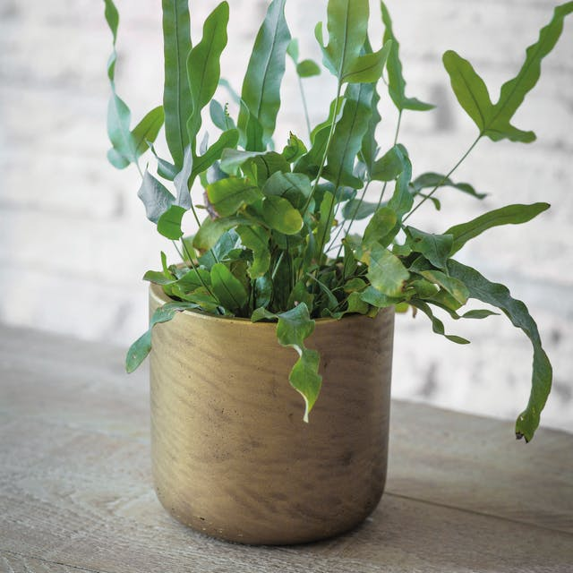 Stratton Plant Pot