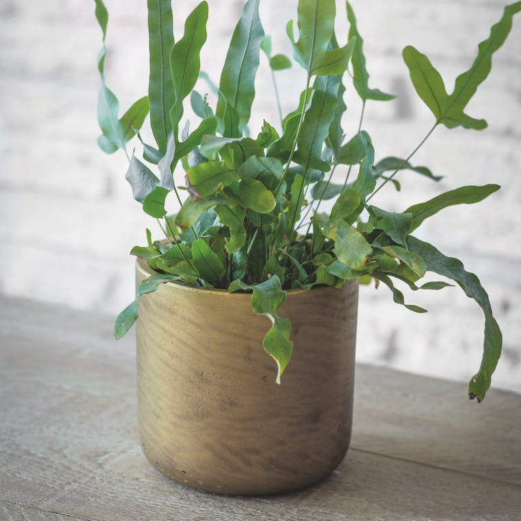 Cement Stratton Plant Pot in Gold | Garden Trading