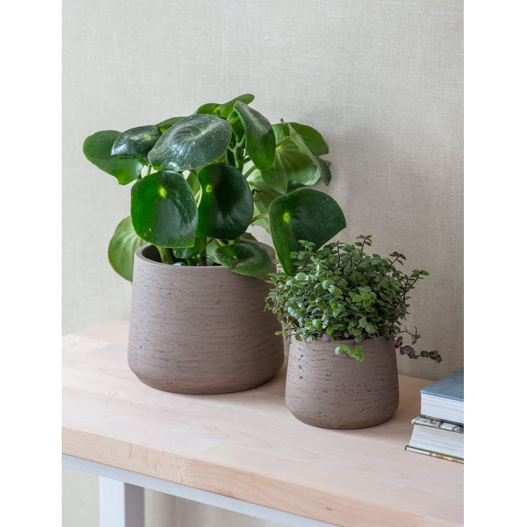 Cement Set of 2 Tapered Pots in Black or Natural | Garden Trading