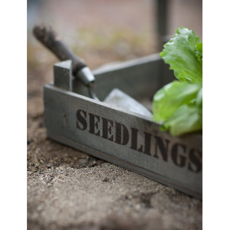 Wooden Seedlings Tray  | Garden Trading